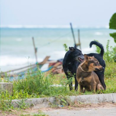 Two street dogs standing by the side of the road