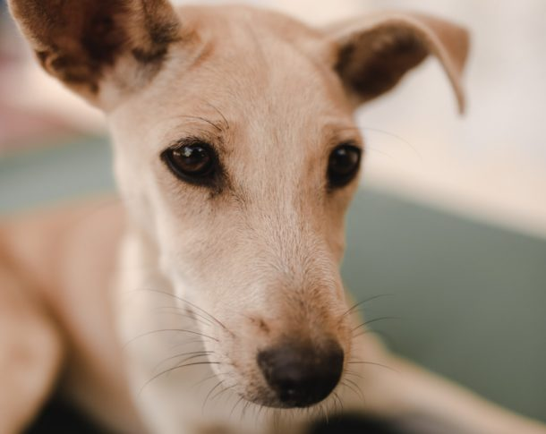 Rita, Sri Lankan street dog at WECare