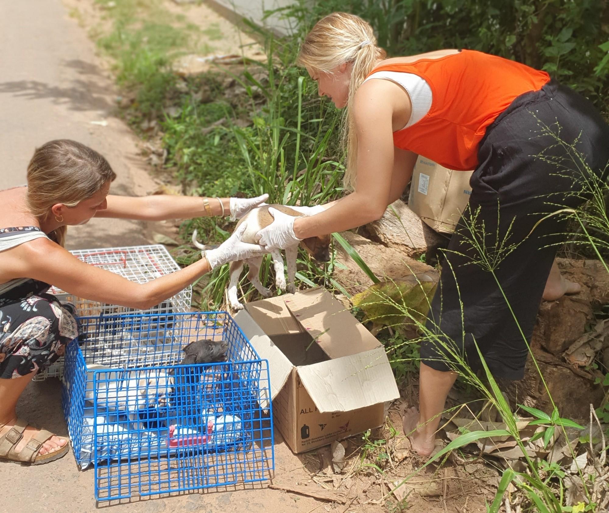 dumped puppies Sri Lanka