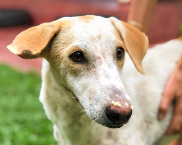Maisie WECare Sri Lankan street dog